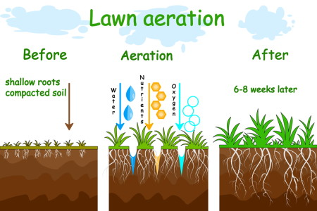 before after aeration